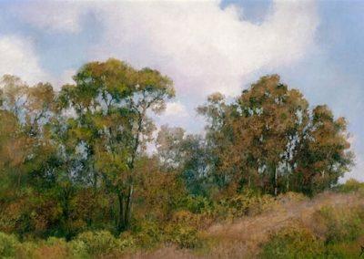Jannene Behl_Ojai Eucalyptus