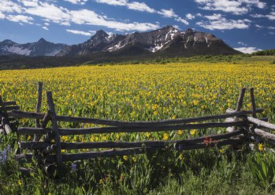 "Yellow Mules near field, western fence and San Juan Mountains, Hastings Mesa, near ""Last Dollar Ranch"", Ridgway, Colorado, USA"