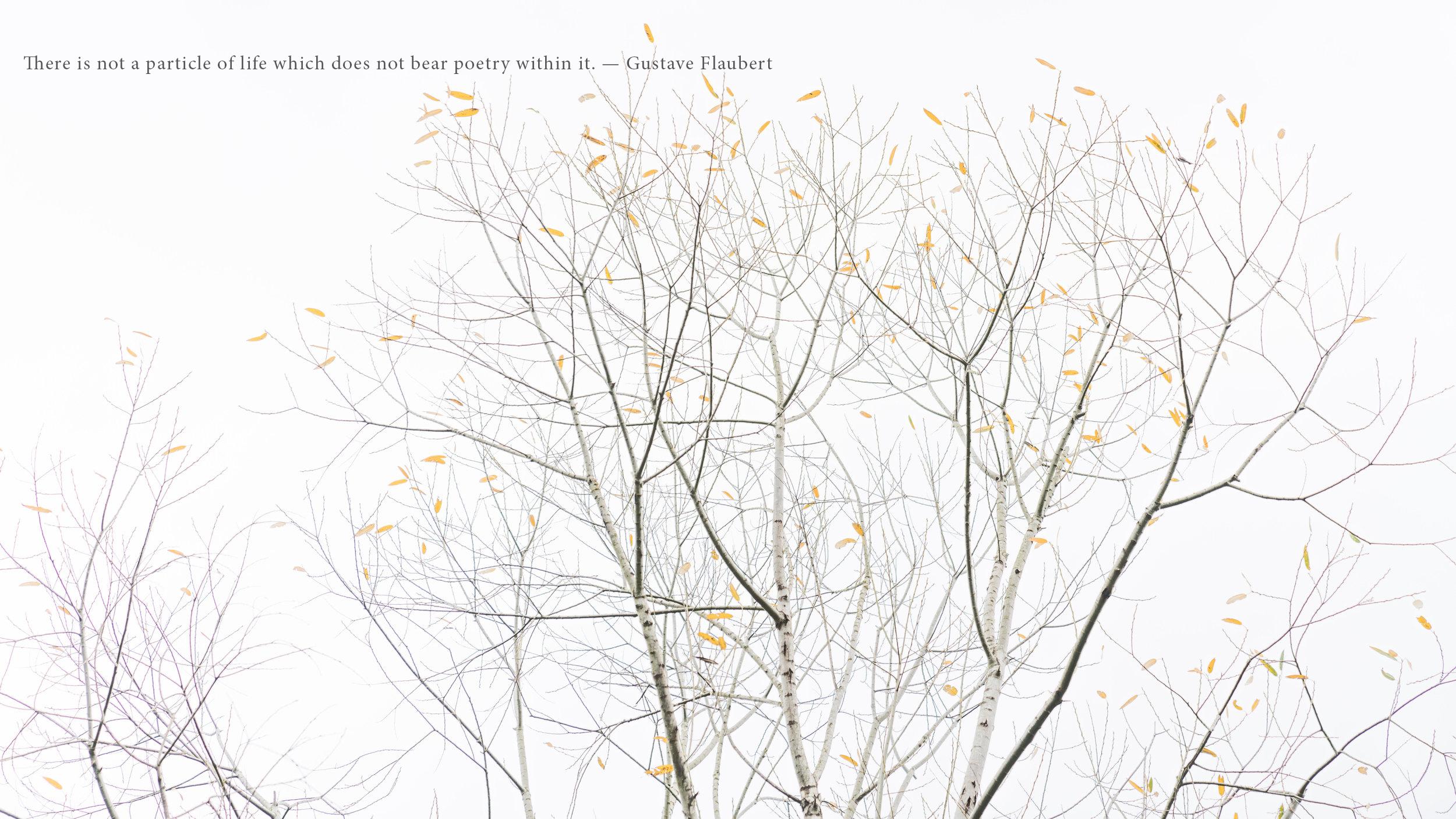 Poetry of Leaves by Deborah Lyon