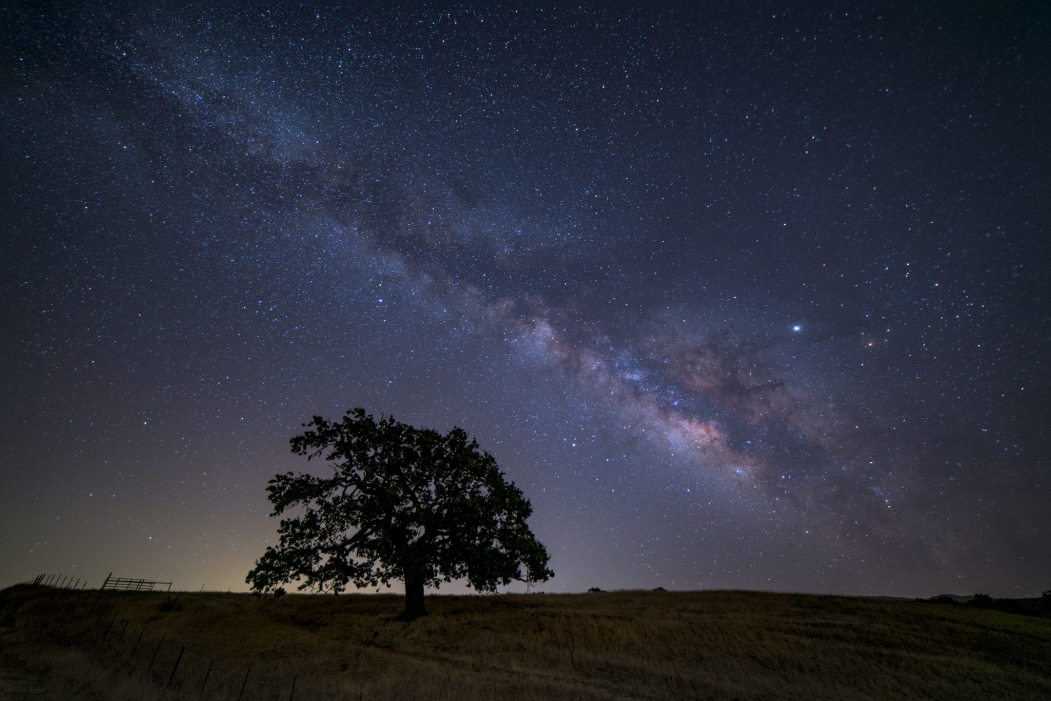 Thomson-Lindsay_Milky Way Over Oak Tree-Photo-12x18