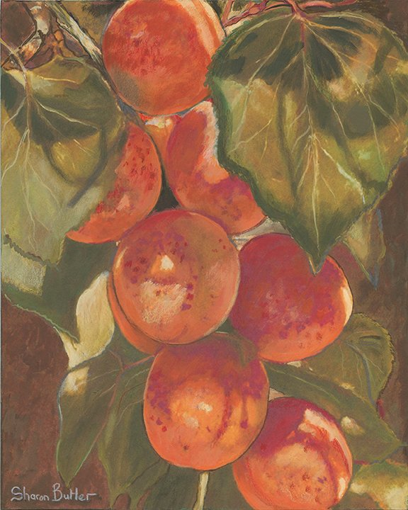 Sharon-Butler_Apricots_oil, 8x10