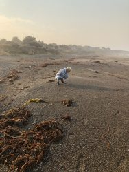 Combing Beaches and Foraging in Forests