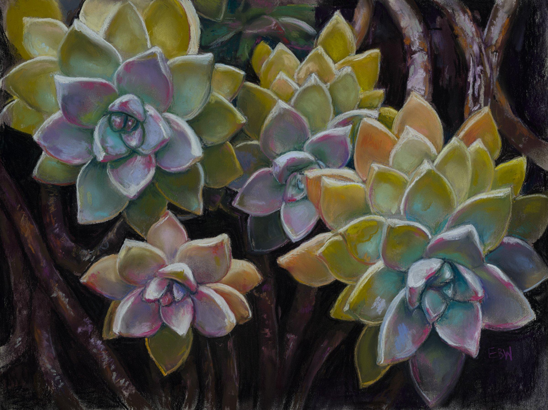 Elizabeth White Colorful Succulents